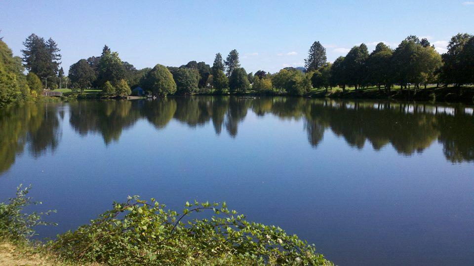 Timber Linn lake.jpg